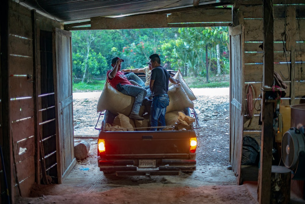 Three cardamom producers sit on full sacks of the spice in a truck bed.