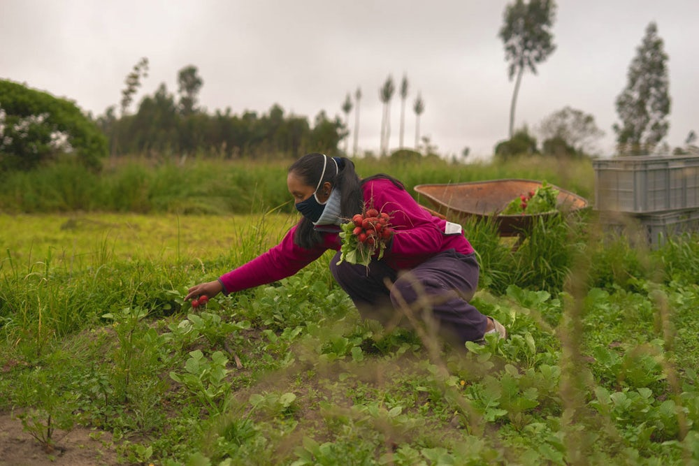 A woman harvests produce from her garden.