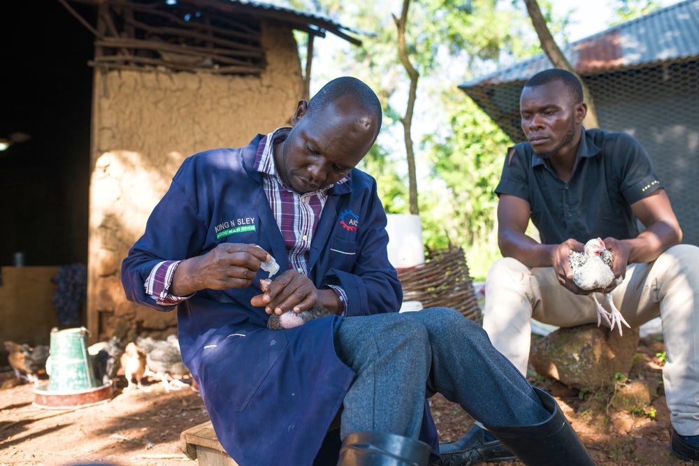 A community vaccinator administers eyedrops to a chicken he holds in his hand. The poultry farmer sits next to him.