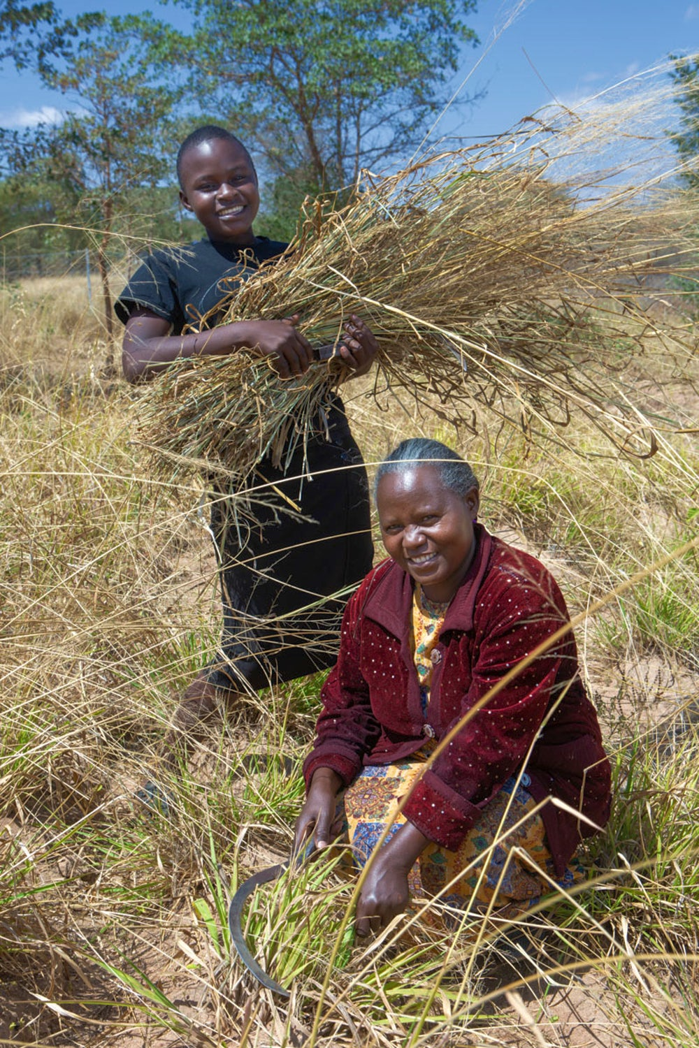 A youth farmer harvests cattle fodder with her mother.