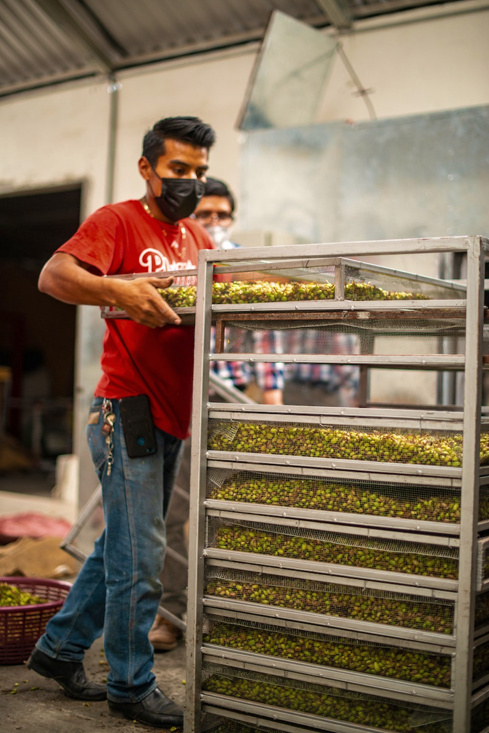 A Guatemalan man preps trays of cardamom for drying.