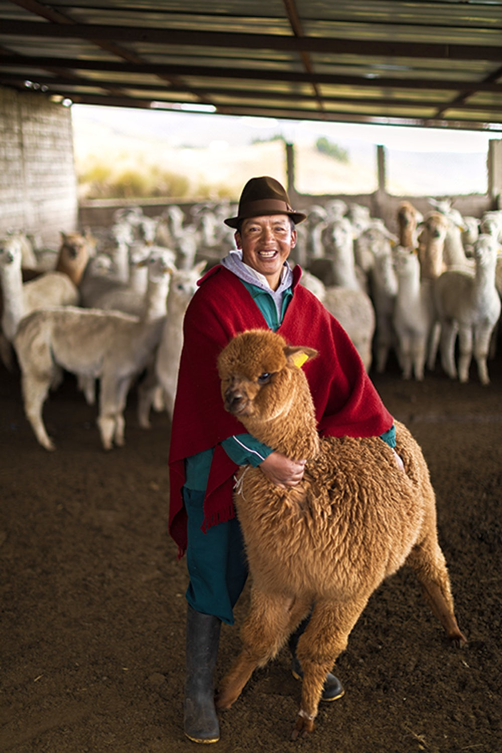 Paco Quishpe, 46, poses with one of the community alpacas.