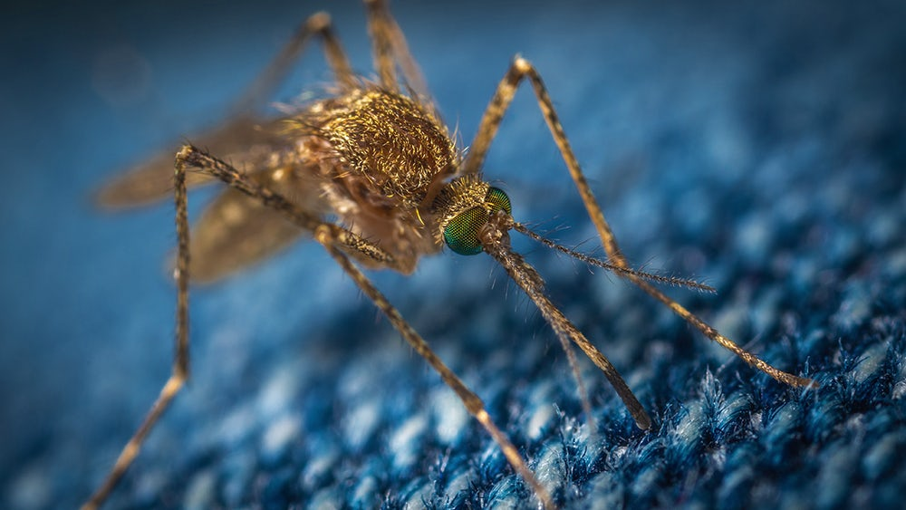 Extreme close-up of mosquito on blue carpet