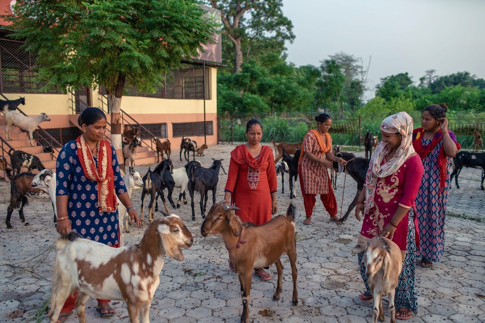 Ladies with Goats