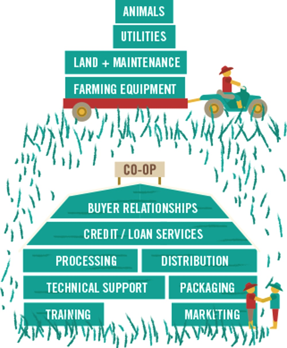 Infographic that shows what the farmer is responsible for in a co-op, including animals, utilities, land and maintenance, and farming equipment, while the co-op helps with the rest.